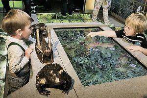 интерактивные детские площадки