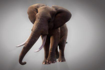 подвинь слона